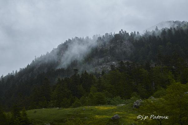 à mi-parcours, brume et forêt.