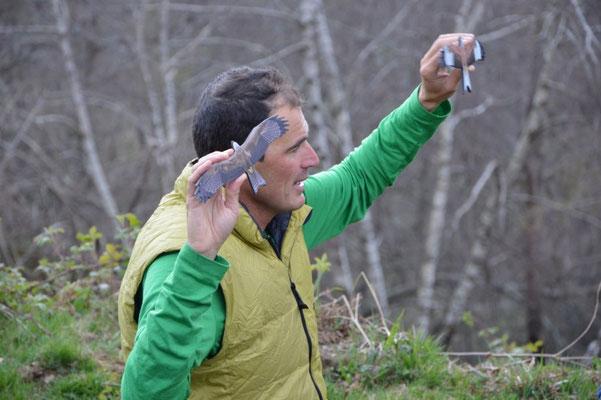 Fredéric Delord, accompagnateur en montagne spécialiste des rapaces et passioné, donne des repères pour distonguer les silhouettes des rapaces en vol