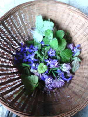fleurs de bourache, ciboulette, feuilles de lierre terrestre, menthe, ronce..