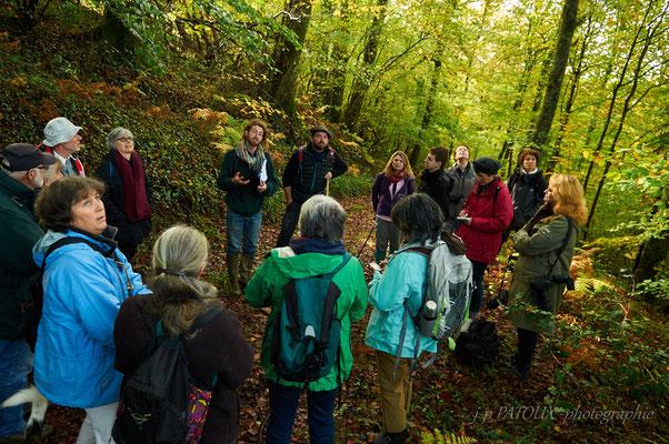 écoutez l'histoire de la forêt