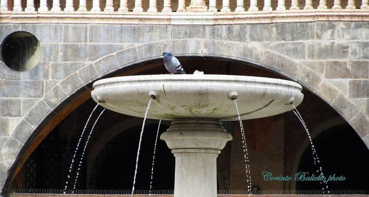 Fontana Pzza Erbe