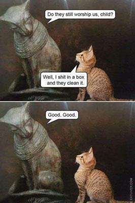 Human Worshipping cats