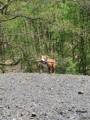 Dieser Hund raste dem Stock hinterher, den steilen Abhang hinunter - und kam zurück, heil und munter. Hund müsste man sein!
