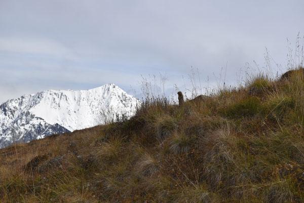 Ein Erdhörnchen (Ground Squirrel) auf dem Weg zum Observation Mountain