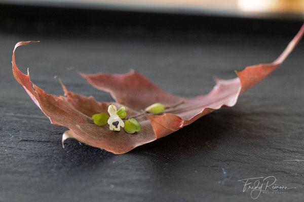 Wunderbare Herbstzeit