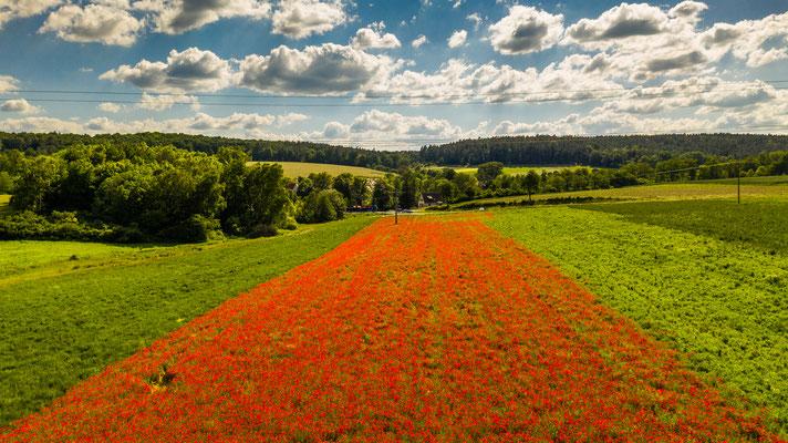 Das schönste Mohnfeld in der Rhön