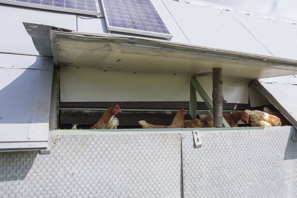 Solaranlage am Hühnerhotel