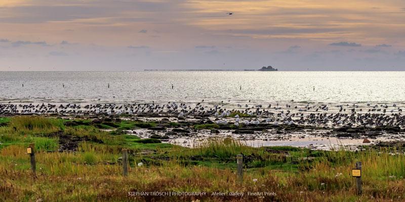 Abendstimmung auf Nordstrand mit Austernfischer & Co.