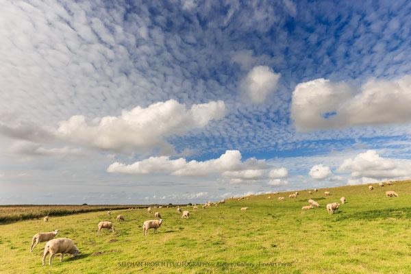Schafe auf der Düne | Beltringharder Koog