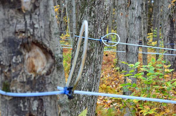 Ahornsirup-Ernte in Vermont