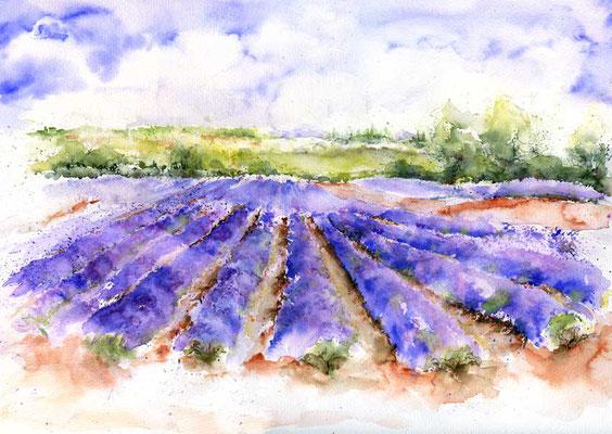 Lavendelmeer / Aquarell 48x34cm