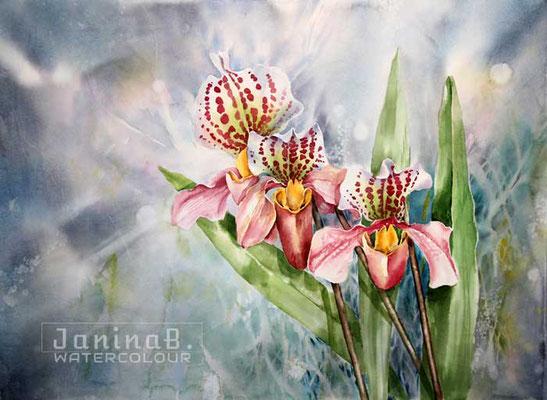 Orchid I 2020 (nicht verfügbar) / 55x75cm Watercolour by ©janinaB.