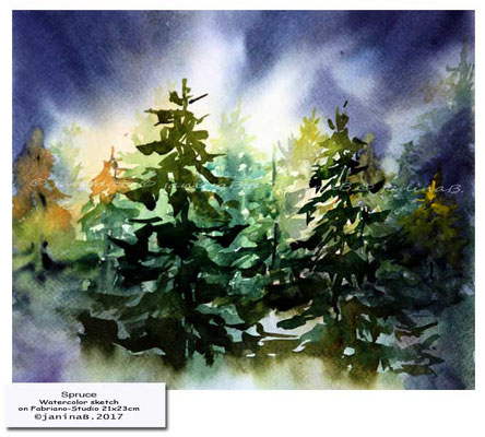 Spruce / Watercolor sketch on Fabriano-Studio 21x23cm © janinaB. 2017 / 40 Euro