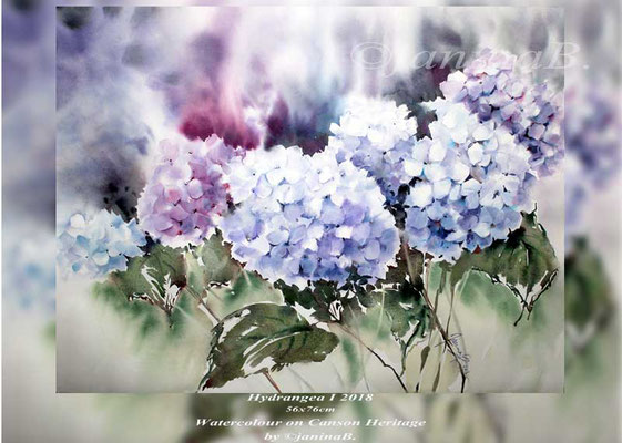 Hydrangea I 2018 / 56x76cm Watercolour on Canson Heritage by ©janinaB.