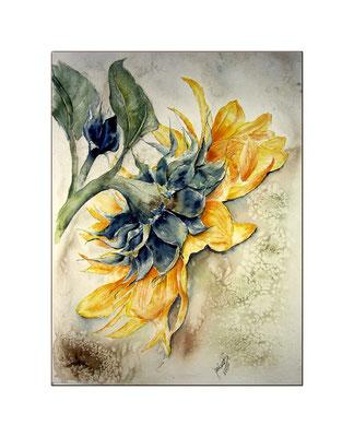 Sunflower / Aquarell 48x36cm