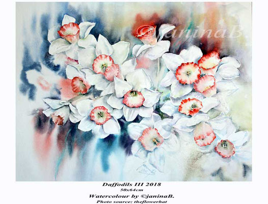 Daffodils III 2018 (privat) / 50x64cm Watercolour by ©janinaB. Photo source: theflowerhat