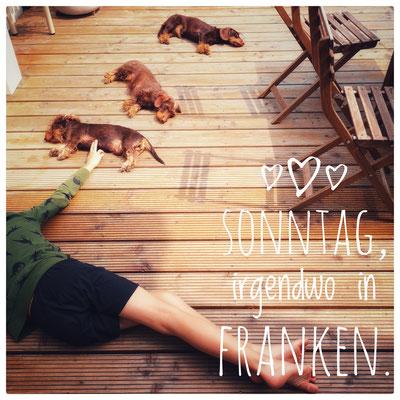 Sonntag in Frankenland - Mein Sohn und die Rauhaardackel