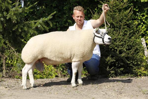 Texelaar Texel Sheep schapen NSFO E. de Haan Schapenfokker Schapenfokkers