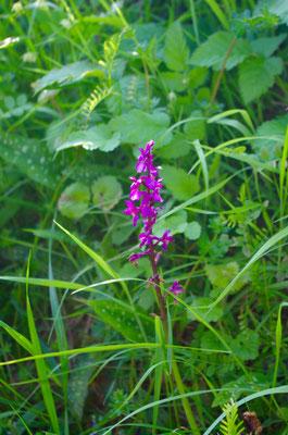 Randonnée âne et fleur en Touraine Val de Loire #balade #nature #forêt #valdeloire