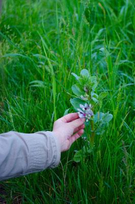 Randonnée âne et fleur en Touraine Val de Loire #balade #nature #forêt #valdeloireée âne et fleur en Touraine Val de Loire #balade #nature #forêt #valdeloire