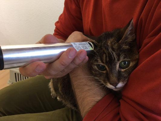 Katze Michette PowertubeSilber-Schmerzbehandlung