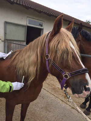 PowerTube Silber Schmertherapie Pferd