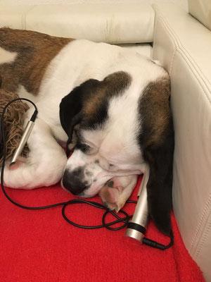 PowerTube® Behandlung eines Hund