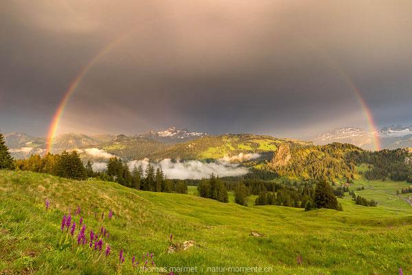 Regenbogen Innerschweiz mit Orchideen