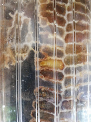Kinderstube der Biene