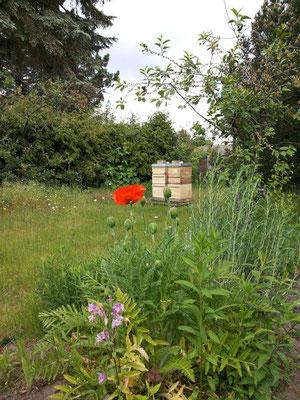 Bienenstand in Britz