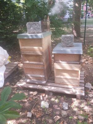 Bienenstand Richard-Grundschule