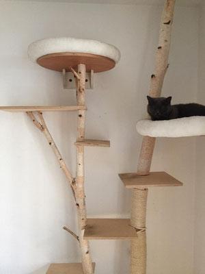 Katzenbaum aus Birke