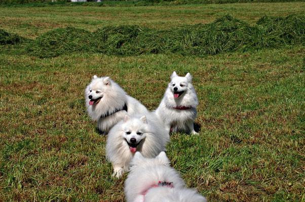 Bub, Quiana, Snoopy und Toka