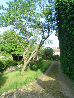 ©Sellen. Chemin du parc qui mène au gîte La Paliole.