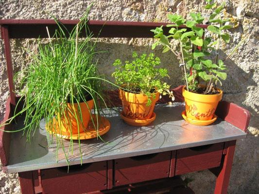©Sellen. Quelques herbes pour assaisonner votre cuisine...