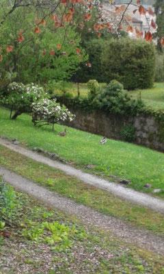 ©Sellen. Le ruisseau attire truites, héron et canards !