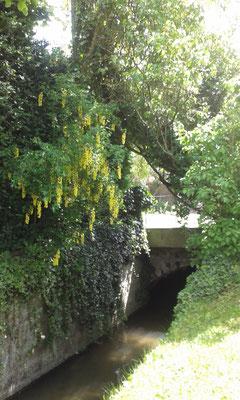 ©Sellen. Un ruisseau traverse le parc de La Paliole.