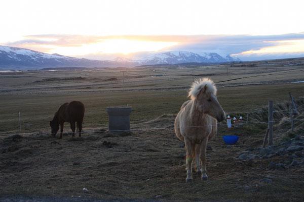 sunset auf der farm