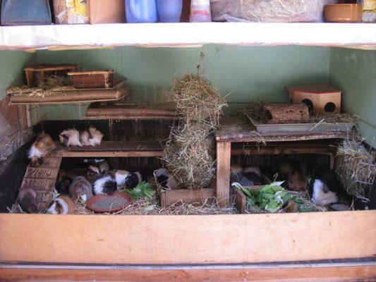 Innenleben unseres Meerschweinchenhauses
