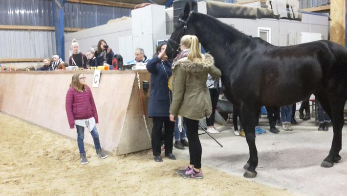 Alle Pferde unseres Stalles gratulieren Alex...