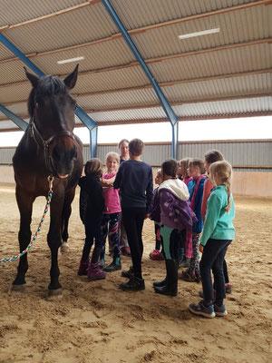 Theroie - hier Pferdekunde