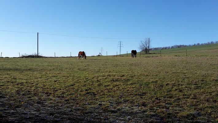.... und dann raus auf die Weide .... und weiterfressen