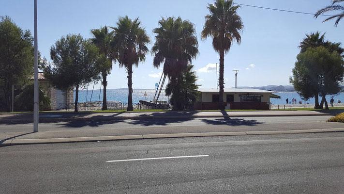 Palmen am Strand von Nizza