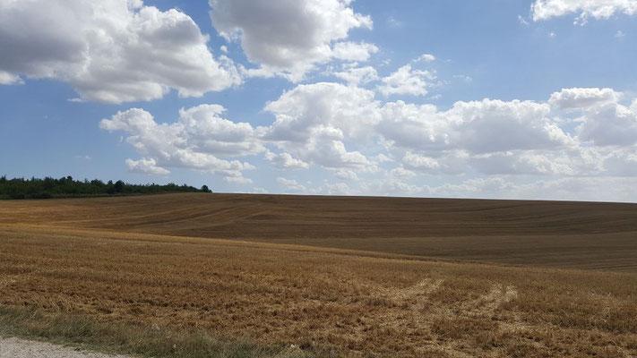 Riesige abgeerntete Felder