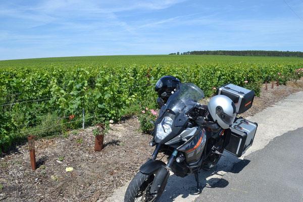 Weingärten am Weg nach Reims