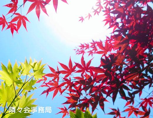 ∞  紅葉