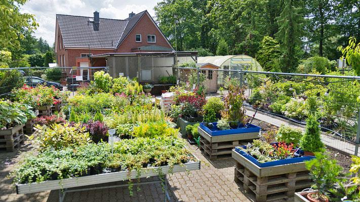 Kohfeldt Gartengestaltung & Pflege