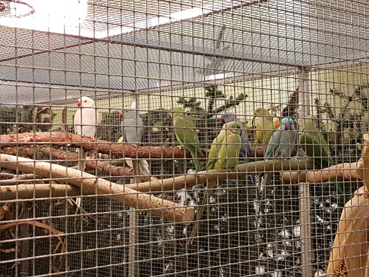 Vögel der Vereinsmitglieder