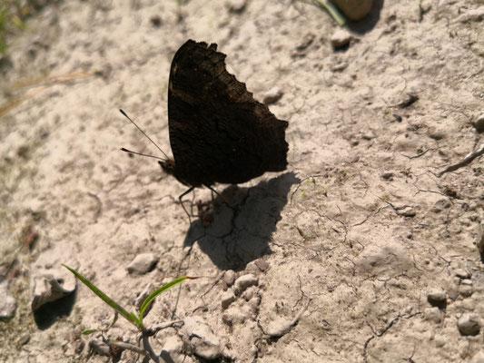 Sonnenbad auf märkischem Sand bei Hoppegarten (Mark)