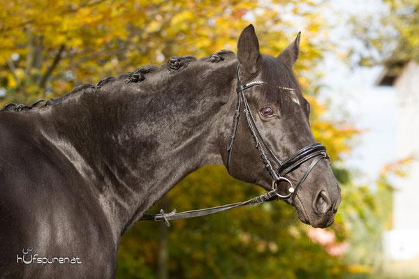 Oldenburger Pferdfotoshooting Herbst